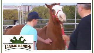Tamme Hanken | Ein Pferd mit vielen Problemen | kabel eins