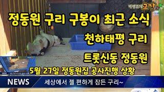 미스터트롯 정동원강아지 최근 소식, 공사진행 상황