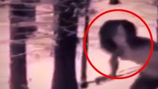 5 Scariest Creatures You Wouldn't Believe if They Weren't Recorded!