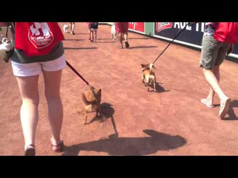 Lexi and Madison Go to Fenway Park
