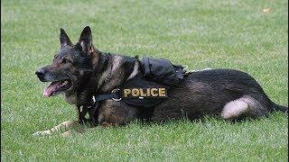 Очень милое видео: полицейских собак провожают на пенсию