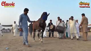 85/Best Horse Dance Punjab Meerik Sial Jhang 2018/ Bani Syed Qalandar Sultan