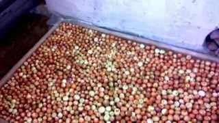 Зеленый лук на зиму (посадка в ноябре)(Выращивание лука на зелень осенью. Посадка лука на зелень. Выращивание лука на перо в подвале, выращивание..., 2014-11-12T16:57:58.000Z)