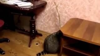 Приколы про кошек и собак фото с надписями