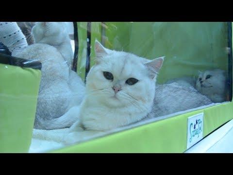 Выставка котов ProPlan 2017. Киев, МВЦ на Левобережной/Cats Exhibition ProPlan 2017