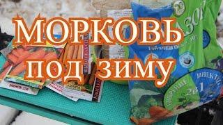 Посадка моркови под зиму. (27.11.2016 г.)