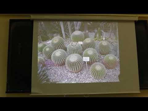 Hellenic Cactus and Succulent Society -  The Genus Echinocactus
