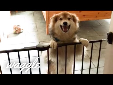 Best Pets Ever 2 | MORE of the Cutest and Funniest Animal Clips of the Week