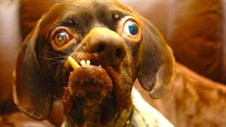 10 Really Ugly Dogs
