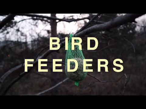 Feeding Birds | Christmas Market