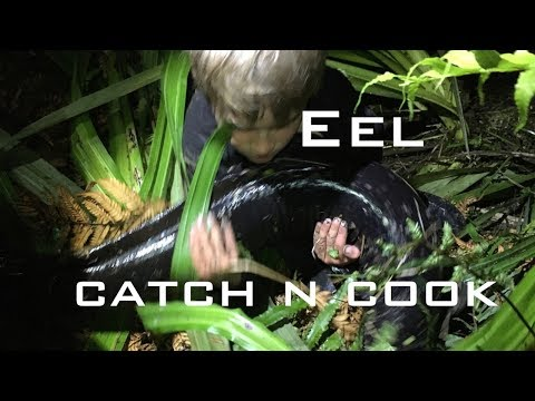 CATCH And COOK NEW ZEALAND Traditional Maori Method EEL Survival Method