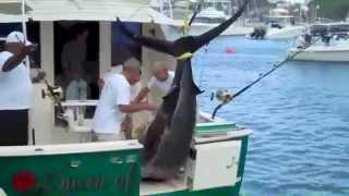 CatchStat | 2012 Bermuda Billfish Blast Blue Marlin 768lbs