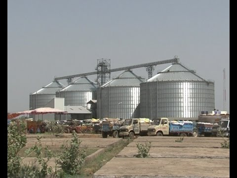 Scientific Storage of Wheat in Steel Grain Silo