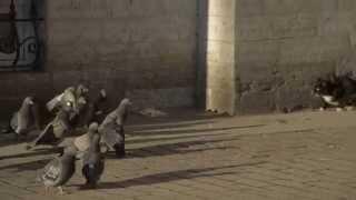 Питерские коты - самые толерантные коты Европы!!!
