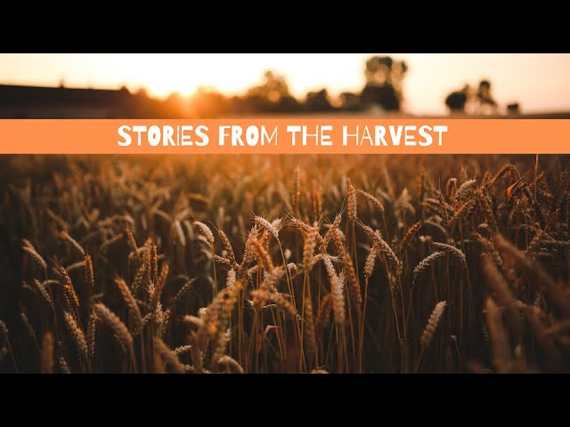 Stories From the Harvest