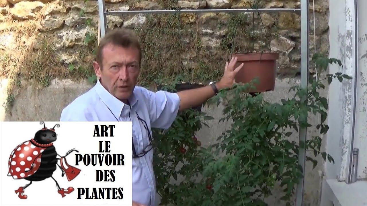 chaine tv de jardinage astuce plants de tomates plant s. Black Bedroom Furniture Sets. Home Design Ideas