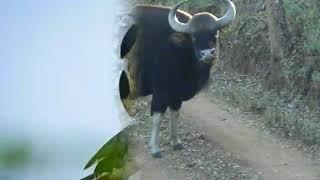 Live spoted wild animals around Dandeli