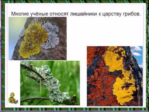 презентация по биологии 10аиз YouTube · Длительность: 5 мин6 с  · Просмотров: 451 · отправлено: 25/11/2012 · кем отправлено: Андрей Пичугин