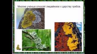 Царство грибов презентация урок биологии 6 класс