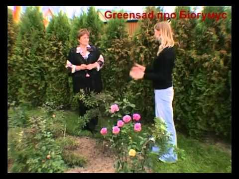 как сделать удобрения в домашних условиях для комнатных растений