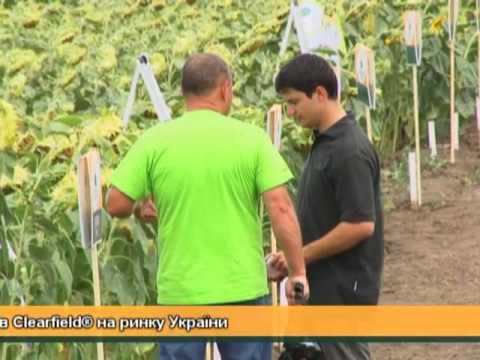 видео: Семена подсолнечника Евралис Семанс