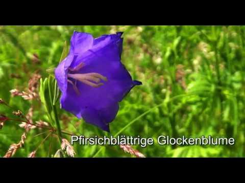 Der Galgenberg - ein kleines Paradies
