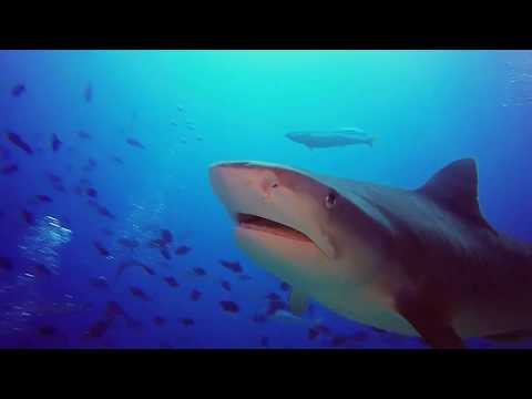 Video Of The Week | Diving with Sharks