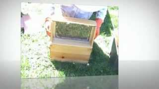 Setting Up An Observation Hive