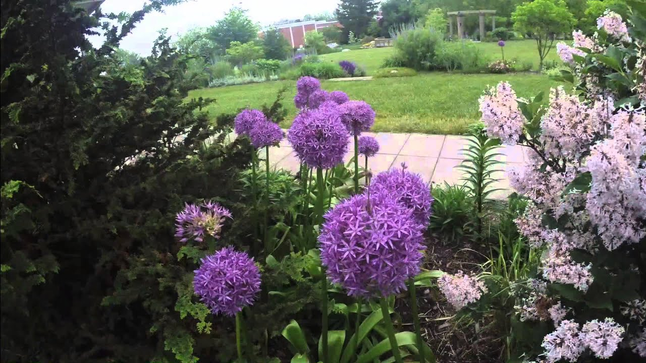 Time Lapse: Hahn Horticulture Garden Blooms Before Your Eyes   Virginia  Tech   YouTube