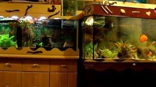 Aquariumanlage mit 3920 Liter