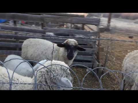 Hebrew farmers in Colorado Pt.  1