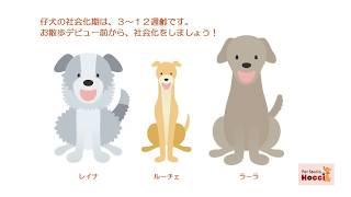 仔犬の社会化期は、3~12週齢です。 8週齢で迎えたとしたら、残り4週齢...