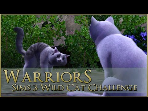 The Search of the Stars 🌿 Warrior Cats Sims 3 Legacy - Episode #57