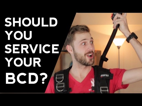 Should You Service Your BCD? | Quick Scuba Tips