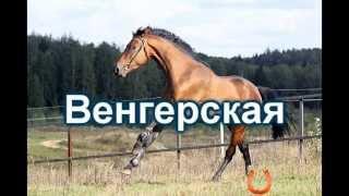 """Все породы лошадей на букву """"В"""""""
