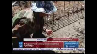 Чупакабра оставила следы в Кыргызстане