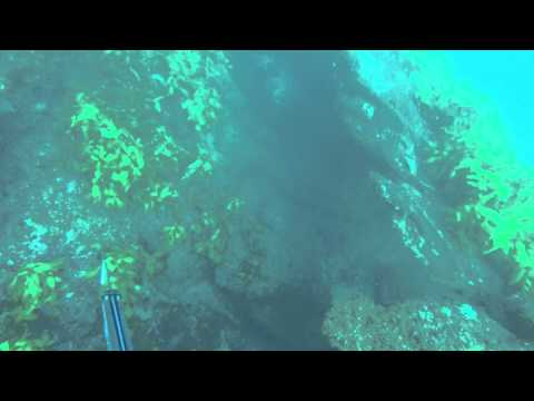 Spearfishing in South East Queensland