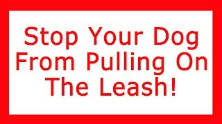 Stop your dog from pulling on the leash - FREE Video
