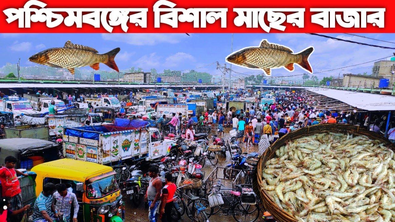 পশ্চিম বঙ্গের বিশাল এক মাছের বাজারে মাছের দামের আপডেট  // Khoribari Fish Market Update