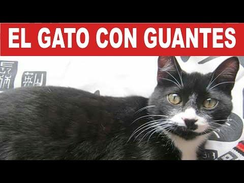 El Gato Con Guantes: Romeo Glove Amaya  | Tu Mascota TV