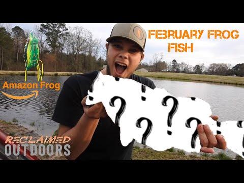 february-fish-caught-on-amazon.com-frog!!