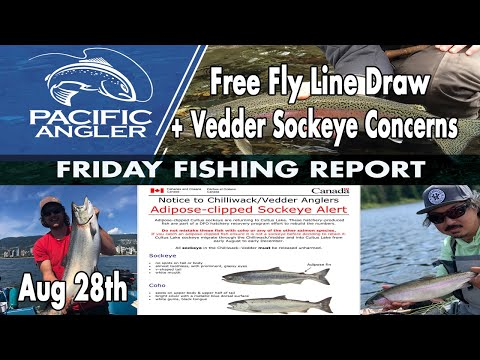 Vancouver Fishing Report - Chinook Are Almost Open + Vedder Sockeye Concerns
