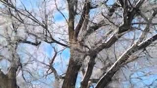Деревья зимой.