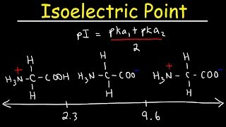 How To Calculate Tнe Isoelectric Point of Amino Acids and Zwitterions