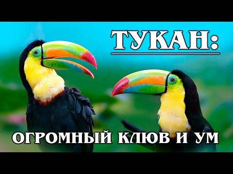 Вопрос: Какая птица имеет длинный, похожий на гарпун клюв?