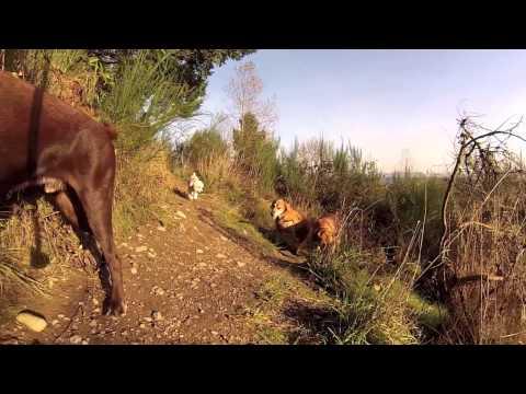 Sunny Dog Adventures