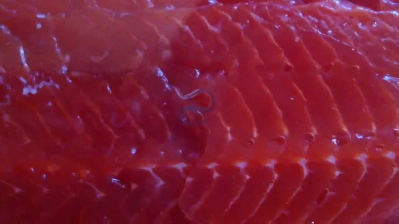 Live worm found in costco sockeye salmon package youtube for Raw fish parasites