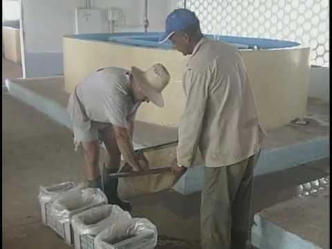 Tanques de geomembrana para tilapia tangeomex doovi for Tanques para cachamas