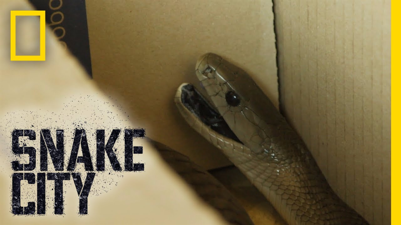 that s a snake in a box snake city youtube