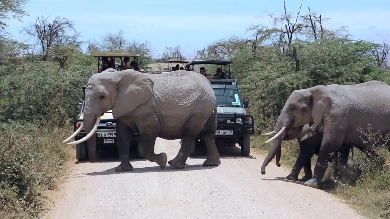 Ol Tukai Lodge - Magical Kenya Travel Expo 2018